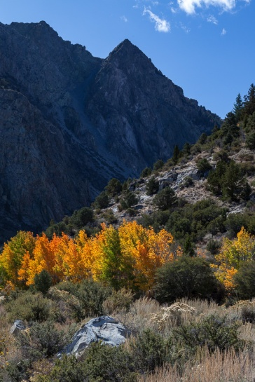 Fall colors near Silver Lake on the June Lake Loop